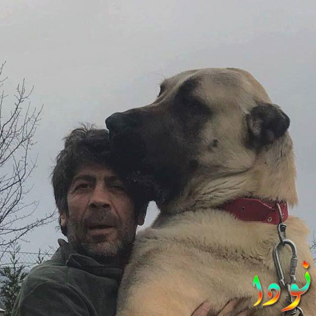 صورة سيلفي لتونجار سلمان مع كلبه