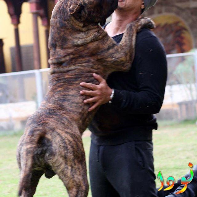 عباس ابو الحسن مع كلبه