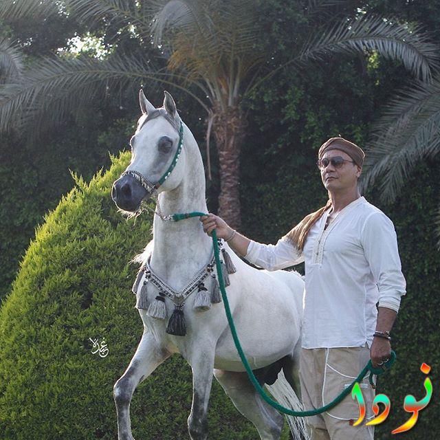 عباس ابو الحسن يركب حصان أبيض