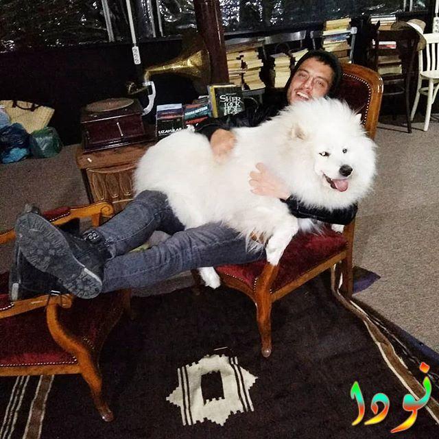 صورة جميلة لعلي بوراك جيلان مع كلب أبيض كبير