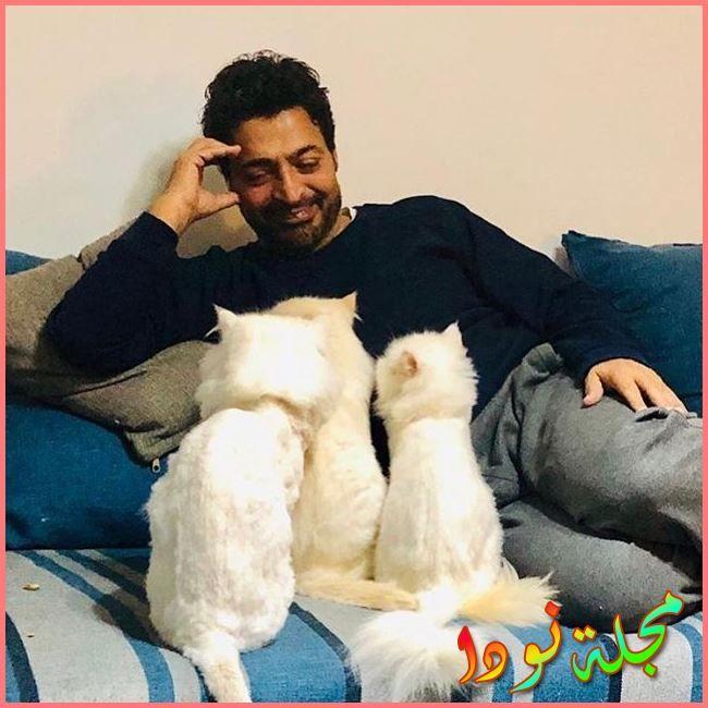 حميد الشاعري وقططته